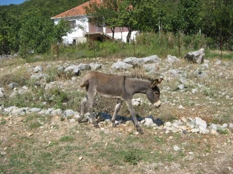 Воспоминание о Черногории. Часть 2 - прозаическая